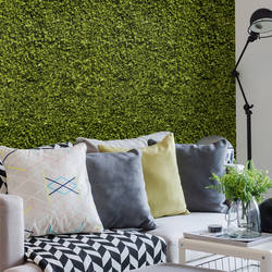 Ficus, Green - Wallpaper Tiles