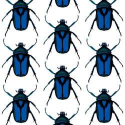 Beetle - Blue