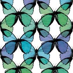 Butterfly - Seafoam