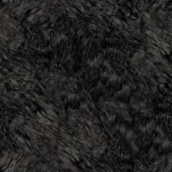 Bear, American Black