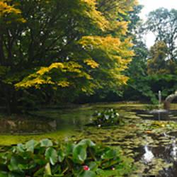 Pond with trees in autumn, Trewidden Garden, Penzance, Cornwall, England