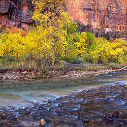 Virgin River at Big Bend, Zion National Park, Springdale, Utah, USA