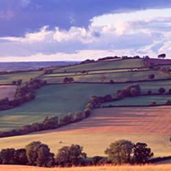Patchwork of a field, Mid Devon, Devon, England