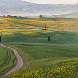 Track passing through a landscape, San Quirico d'orcia, Val d'Orcia, Tuscany, Italy