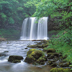 Waterfall in a forest, Sgwd Yr Eira (Waterfall of Snow), Afon Hepste, Brecon Beacons National Park, Wales