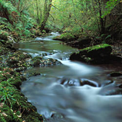 River flowing through a forest, River Lyd, Lydford Gorge, Dartmoor, Devon, England