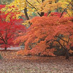 Autumn trees in Westonbirt Arboretum, Gloucestershire, England