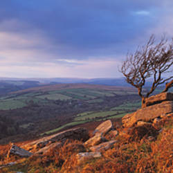 Crooked tree on Yar Tor in evening light, Dartmoor, Devon, England