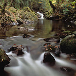 River flowing through a forest, River Erme, Ivybridge, Dartmoor, Devon, England