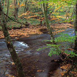 River flowing through a forest in autumn, River Teign, Dartmoor, Devon, England