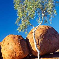 Rock formations with ghost gum tree, Devil's Marbles, Northern Territory, Australia