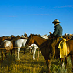 Cowboys riding horses in a field