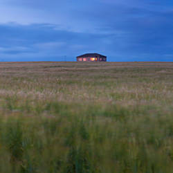 Barley field with a house in the background, Orkney Islands, Scotland