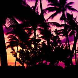 Silhouette of palm trees at sunset, Ko Olina, Oahu, Hawaii, USA