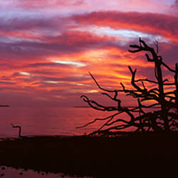 Silhouette of plants at dusk, Pine Island, Lee County, Florida, USA