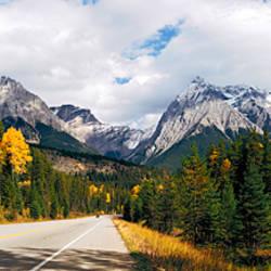 Road passing through a forest, Yoho National Park, Alberta, British Columbia, Canada