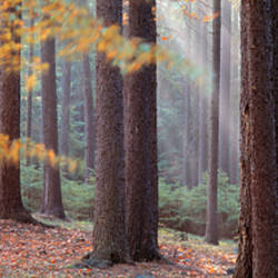 Trees in a forest, South Bohemia, Czech Republic