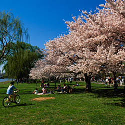 Group of people in a garden, Cherry Blossom, Washington DC, USA