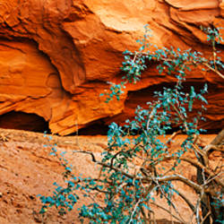 Plant in front of rock formation, Grand Staircase-Escalante National Monument, Utah, USA