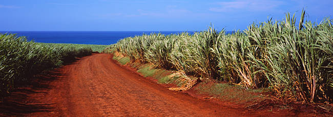 Dirt road passing through a sugar cane field, Kauai, Hawaii, USA