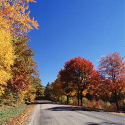 USA, New York State, Alleghany State Park, Maple trees along the road