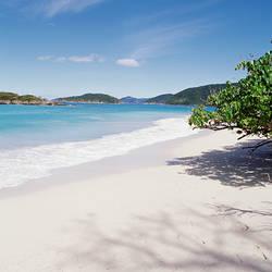 US Virgin Islands, St. John, Cinnamon Bay, Trees at the North Shore