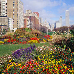 Flowers in a garden, Grant Park, Michigan Avenue, Chicago, Illinois, USA