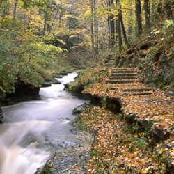 Buttermilk Creek, Ithaca, New York State, USA