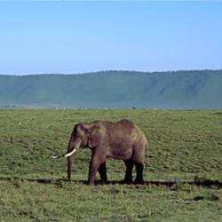 Elephants Ngorongoro Crater Tanzania Africa