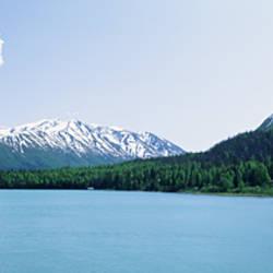 Forest at the riverside, Kenai River, Kenai Peninsula, Alaska, USA