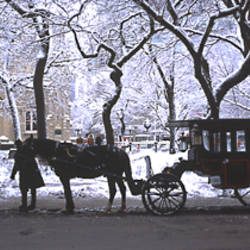 Horses & carriages Chicago IL USA