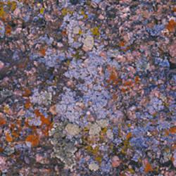 Close-up of feldspar granite, Sherman Mountains, Albany County, Laramie County, Wyoming, USA