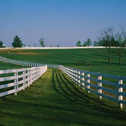 Fences around ranches, Lexington, Kentucky, USA