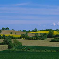 Crop in the field, Holstein, Schleswig-Holstein, Germany