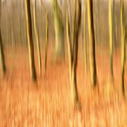 Forest Tayside Scotland