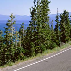 Pine trees on both sides of Highway 89, Lake Tahoe, California, USA
