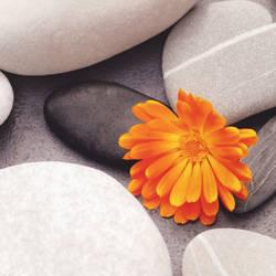 A Heart Among Stones
