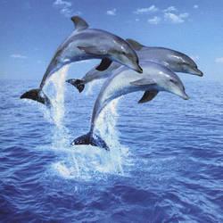 Three Dolphins Door mural wallpaper, 1 part: 599