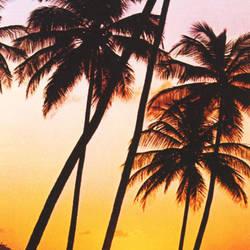 Sunny Palms Door Mural