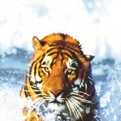 Bengal Tiger Door Mural