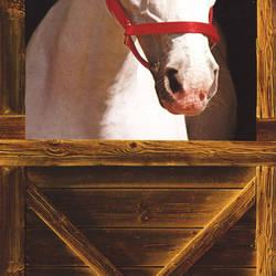 Barn Horse Door Mural